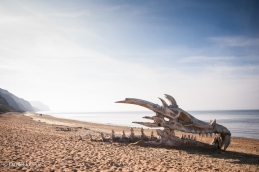 Dragons head in Devon/ Blinkbox © Daniel Lewis 2013