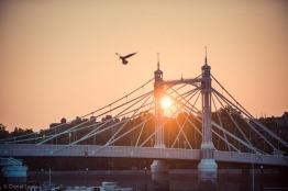 Albert Bridge/ Linley © Daniel Lewis 2013