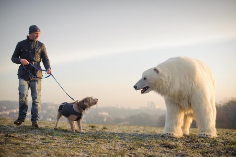 Polar_Bear-19