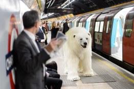 Polar_Bear-30