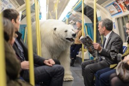 Polar_Bear-37