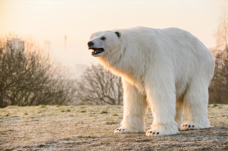 Polar_Bear-4