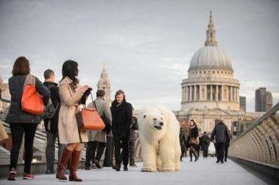 Polar_Bear_Southbank-1