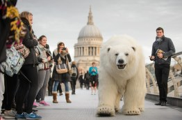 Polar_Bear_Southbank-7