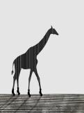 RenniePilgrem_Giraffe_27x36cm150